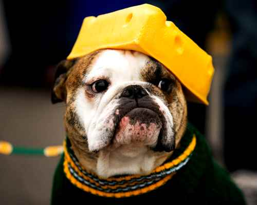 Can Dogs Eat Cheese?​ Is Cheese good for Dogs