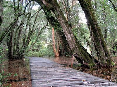 Resultado de imagen para bosques en el bolson