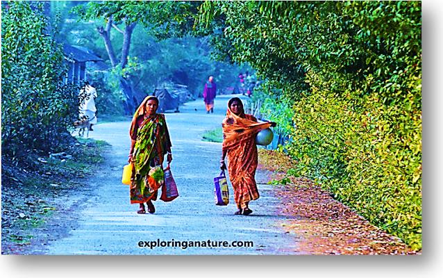 Village view at Sundarban National Park