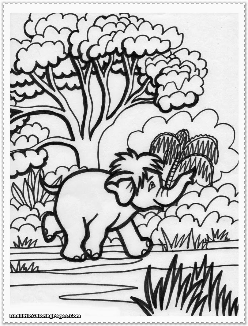 Realistic Jungle Animal Coloring Pages | Realistic Coloring Pages