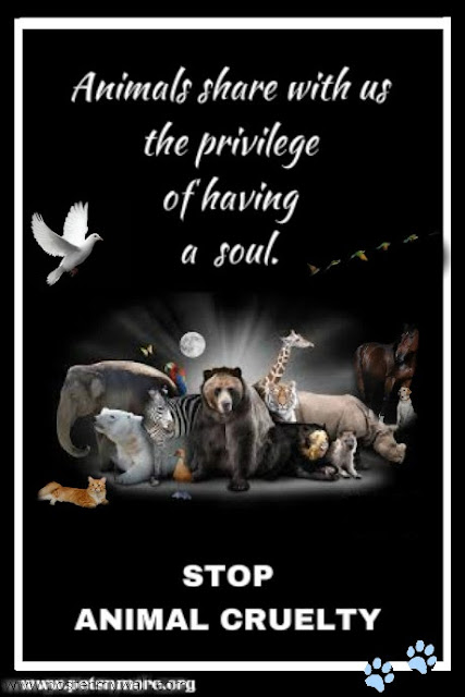 animal, dog, cat, pet, animal, inspiring quotes for animal lovers, petsnmore.org, soul