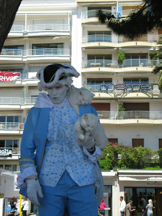 Cats at the film festival in Cannes