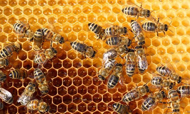 تفسير رؤيه النحل في الحلم بالتفصيل