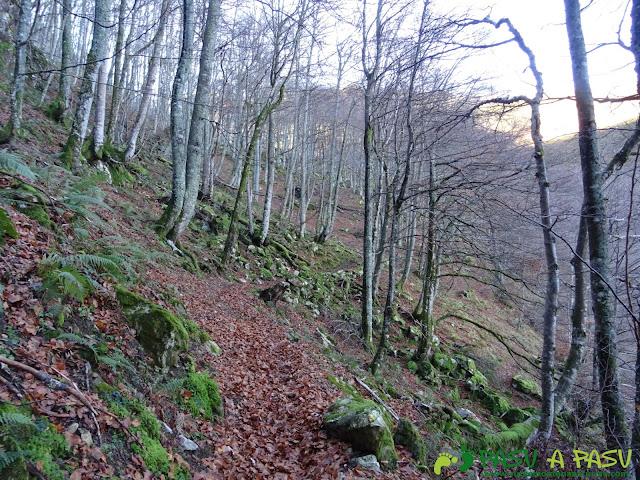 Ruta Gumial: Bosque