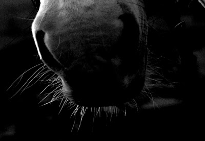 Horse Photography Cumbria