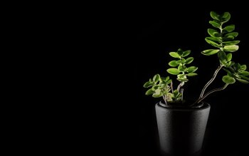 Wallpaper: Natural Green in Darkness