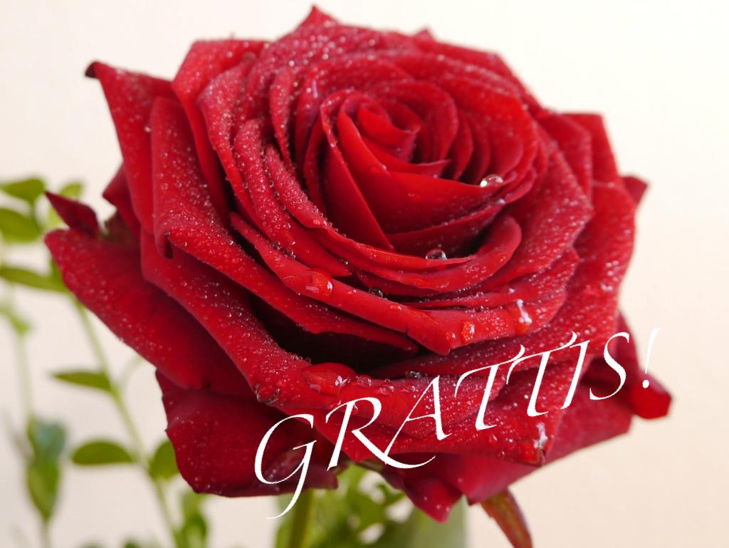 grattis hälsningar på födelsedagen Vittensten: Grattis på Födelsedagen Therese! grattis hälsningar på födelsedagen