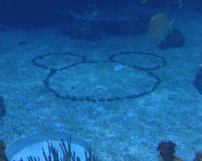 Hidden Mickey in Aquarium EPCOT