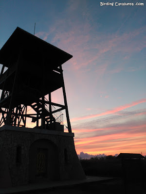 Observatorio de Migjorn