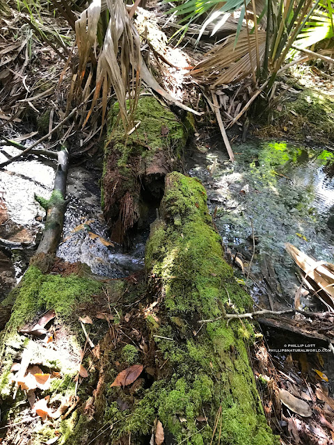 Phillip's Natural World 1 0 2: Poisonous Snakes of Florida