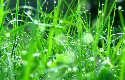 What Are the Healing Powers of Morning Dew