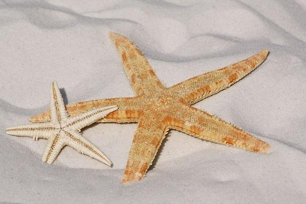 deniz yıldızı sahil, deniz