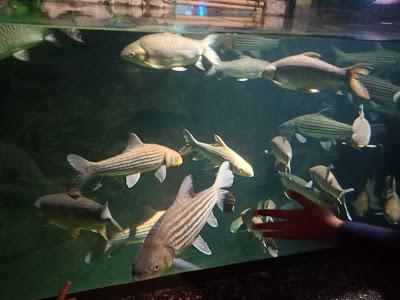 Jenjalan Di Aquaria KLCC