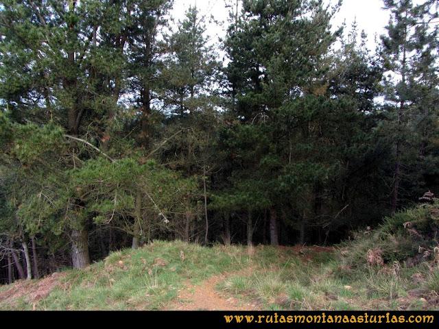 Ruta Torazo, Pico Incos: Entrando en el pinar