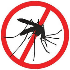 dengue, health, home and living, home tips, how to keep our home safe from bugs, mosquitoes,