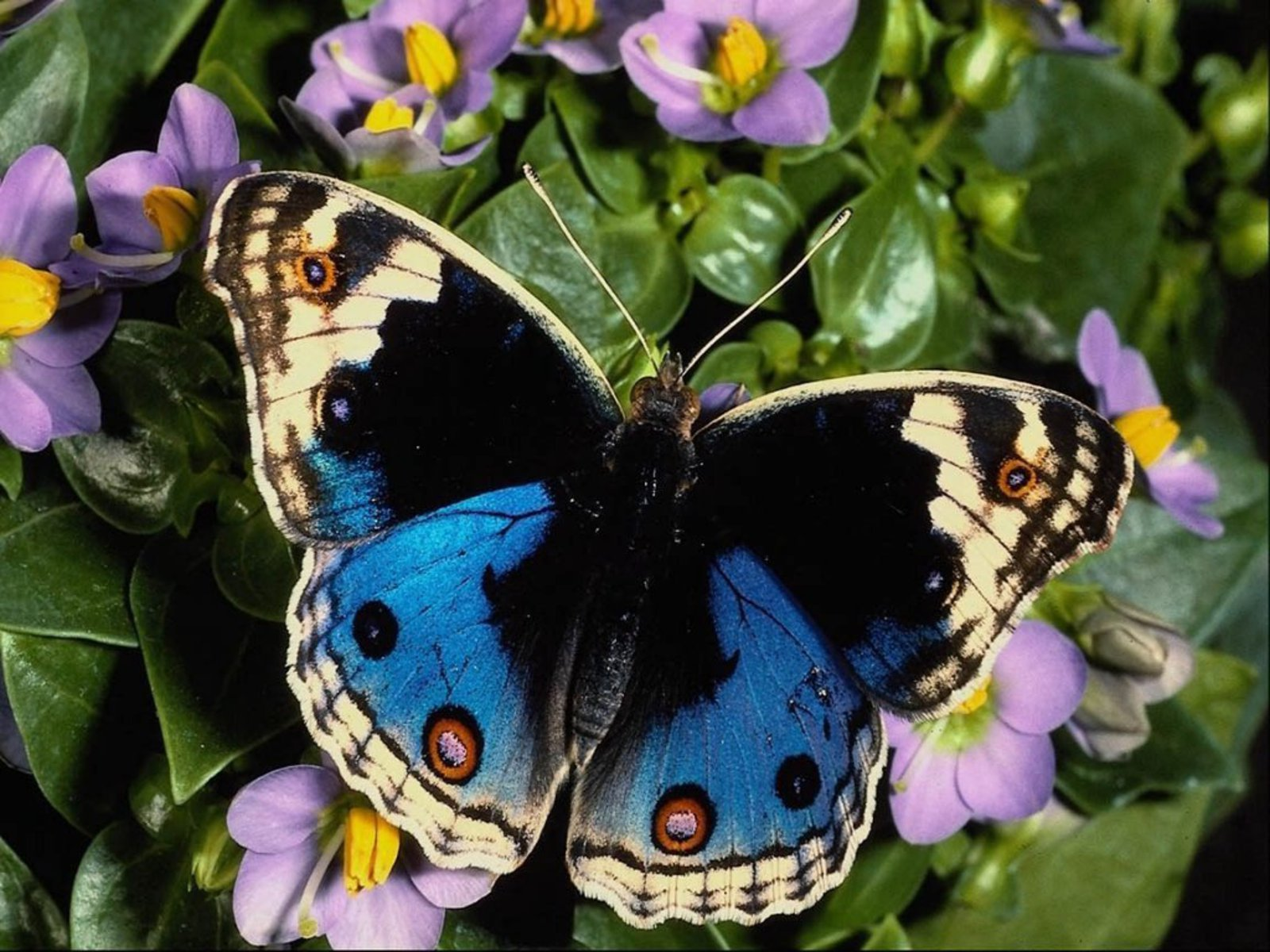 chronicles of fibromyalgia the butterfly affect