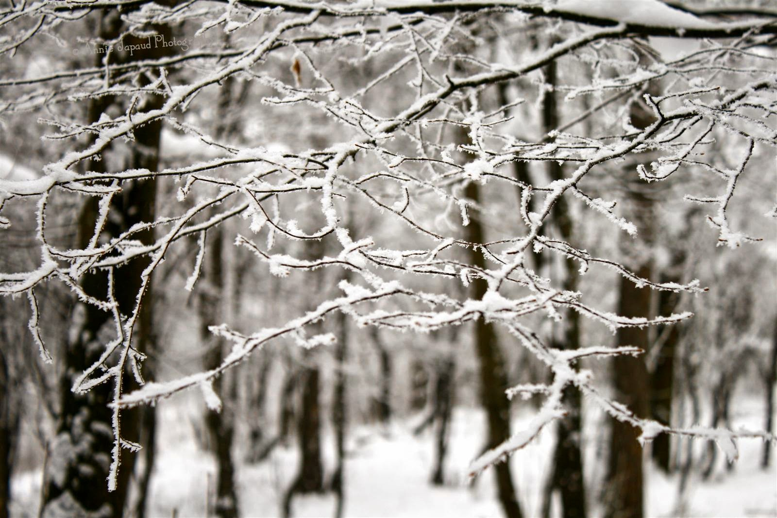 branches, snow, forest
