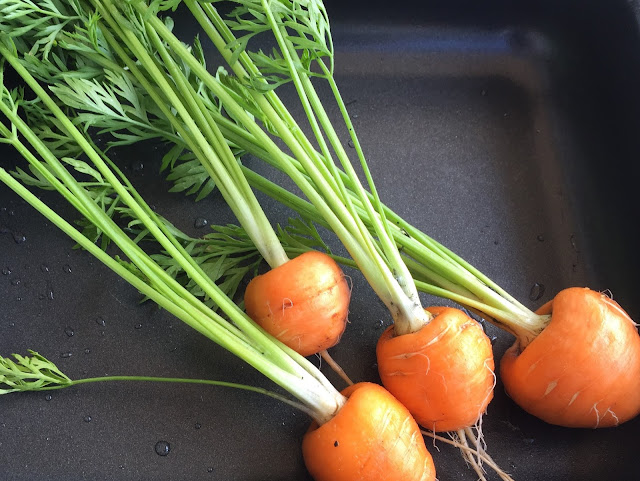 Vier Karotten der Sorte Pariser Herzchen mit Grün
