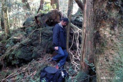 hutan aokigahara di jepang hutan tempat favorite untuk bunuh diri