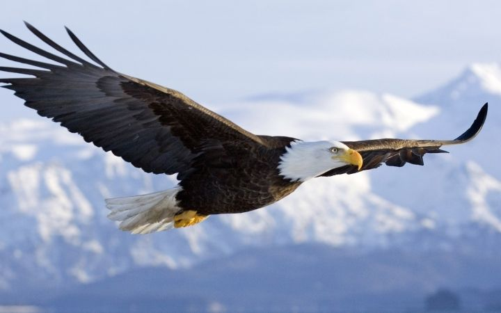SEVEN LEADERSHIP PRINCIPLES TO LEARN FROM AN EAGLE - Wisdom to Prosper