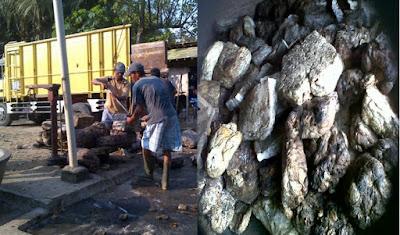 Prospek Komoditas Karet dan Olahan Karet di Provinsi Lampung