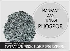 Manfaat dan fungsi Fosfor atau Phosphor (P) bagi tanaman