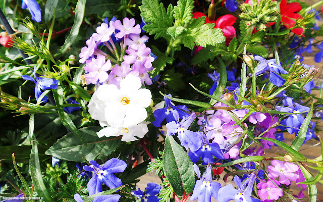 Kleurrijke zomer wallpaper met verschillende soorten bloemen