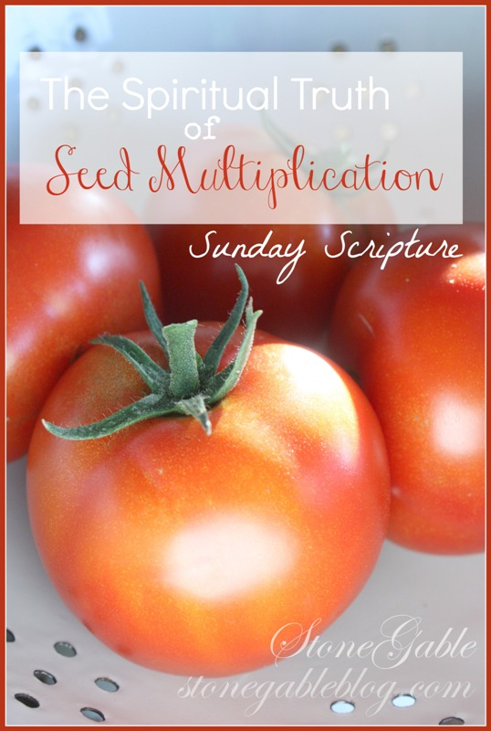 TOO MANY TOMATOES OR THE SPIRITUAL TRUTH OF SEED