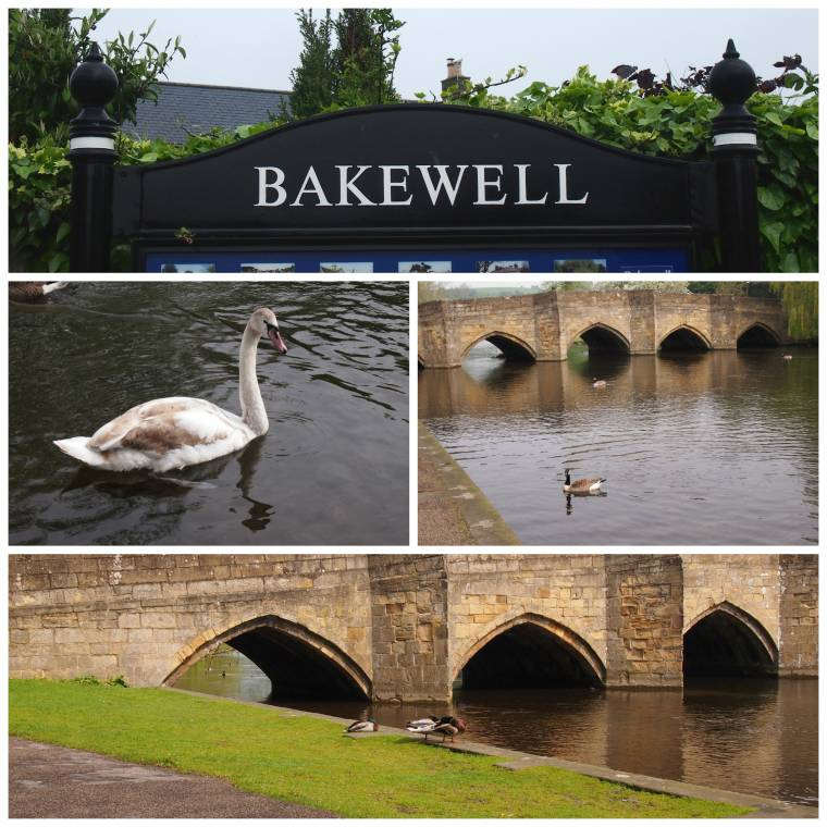 Bakewell: Saturdays Critters And An Angry Swan?