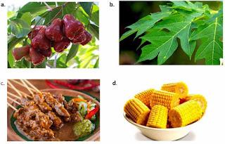 Soal IPA : Hewan Berdasarkan Jenis Makanannya + Jawaban