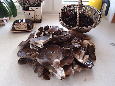 grzyby 2017, grzyby w grudniu, grzyby zimowe, grzyby w Lasku Wolskim, uszak bzowy, boczniak ostrygowaty