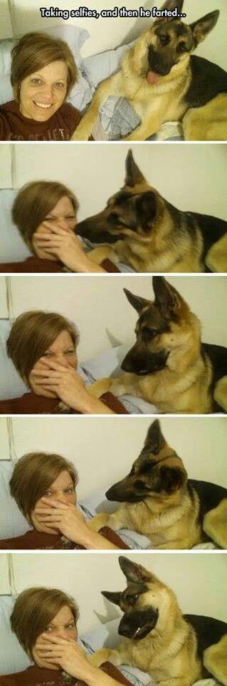 Best Dog Memes Viral Online 9