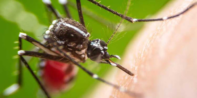 tehlikeli-hayvan-sinekler