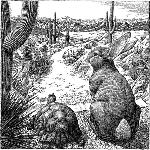 13-Tortoise-&-Hare-Michael-Halbert-Scratchboard-Images-of-Animals-and-Architecture-www-designstack-co