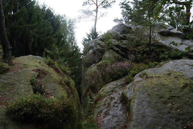 Bewachsene Felsen, umgeben von Bäumen