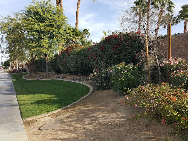 Lawn and Drought Resistant Landscaping on the Streets of Palm Springs
