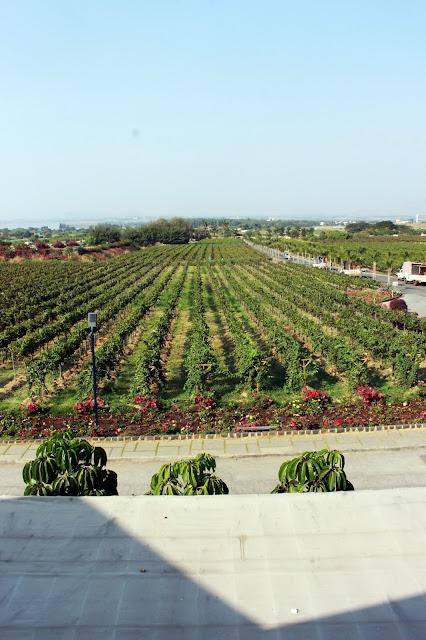 India, travel, mumbai, nashik, sula, vineyard, tour, experience, wine, colourful, grape, plantation