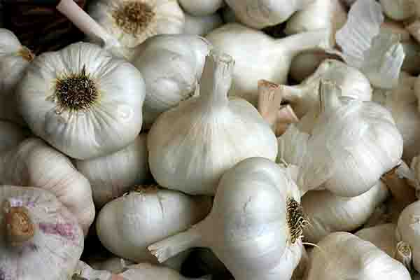Did You Know That Consuming More Garlic Can Make You More Attractive to Women? READ HERE!