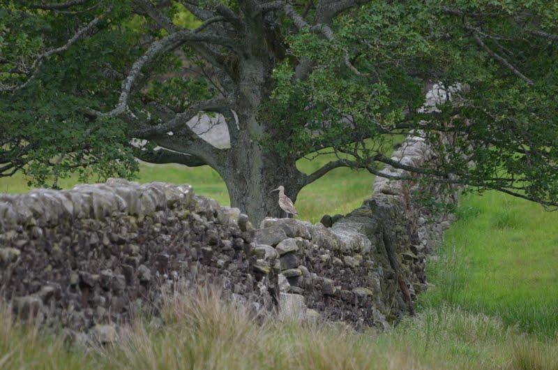 rock stone branch - photo #32