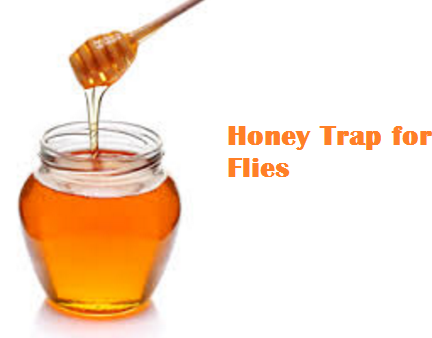 Honey Trap for Flies