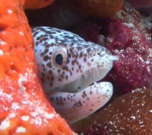 A Vеrу Sіmрlе Guіdе Tо Frее Sсrееnѕаvеrѕ Fish Sample