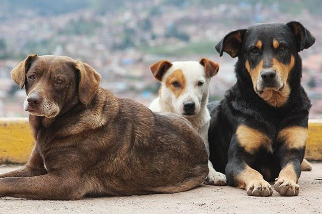Καταγγελία: Γέμισε η Αγία Τριάδα αδέσποτα σκυλιά που τα εγκαταλείπουν εκδρομείς από την Αθήνα