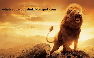 King of Groups WhatsApp Group Link