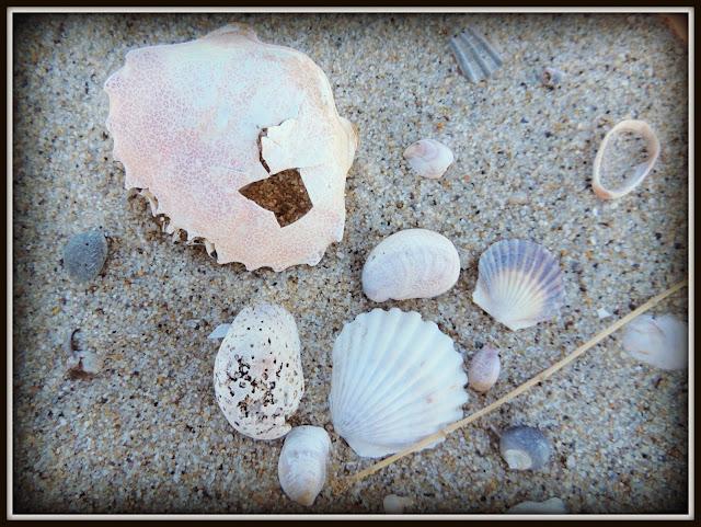 Great Island Trail: Conchas