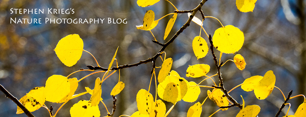 Stephen Krieg's Nature Photography Blog