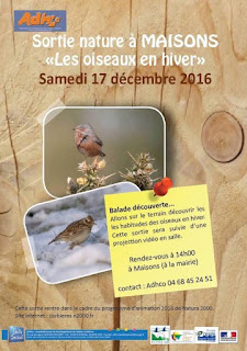 """Sortie nature à Maisons sur le thème """"Les oiseaux en hiver"""""""