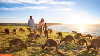 Cover Photo: Kangaroo Island