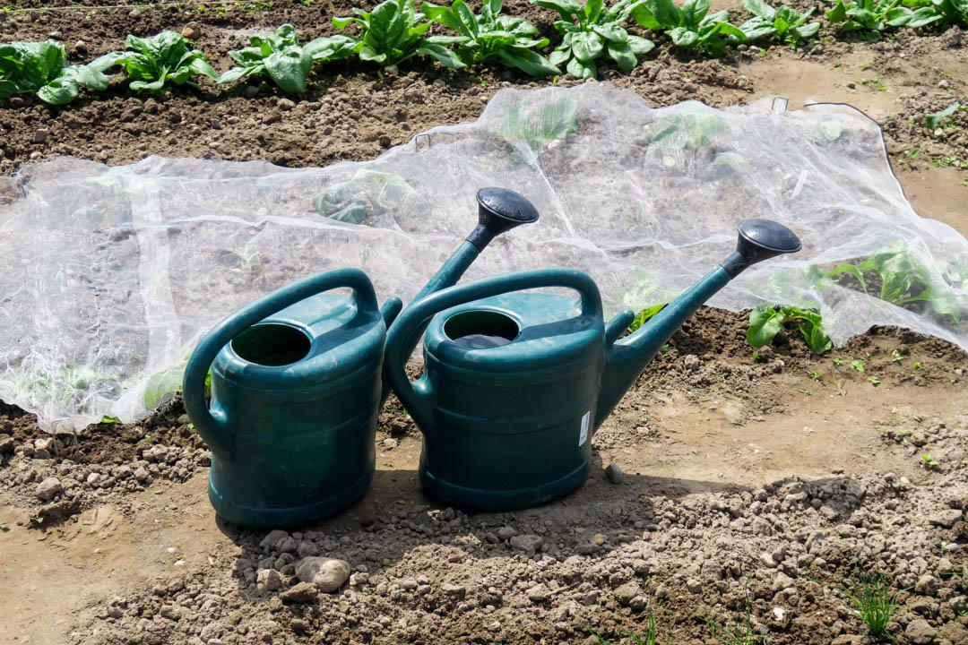 Ackermomente, Acker, eigene Ernte, Spinat, Zwiebeln, Rucola, Radieschen, Fleurcoquet