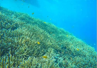 Alam Bawah Laut Pulau Pari
