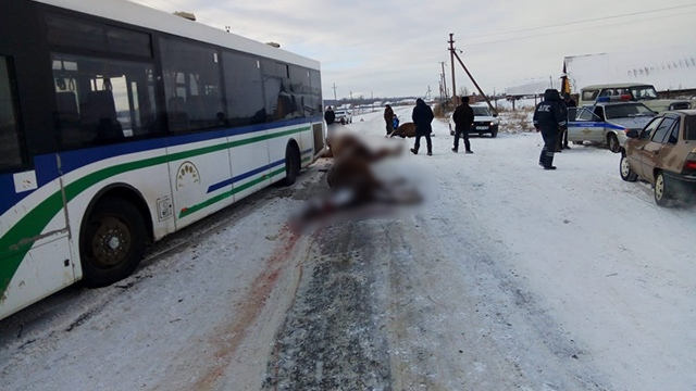 v-bashkirii-avtobus-sbil-tabun-loshadej